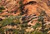 Zion National Park, Utah - S11 - 65 - 72 ppi