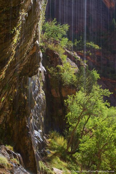 Weeping Rock, Zion National Park, Utah