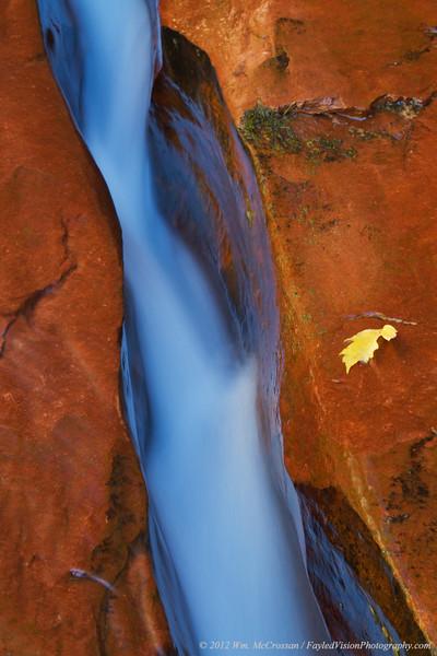 Left Fork of North Creek, Zion National Park, Utah
