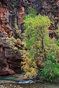 Trail to Virgin Narrows, Zion, Fall 2008