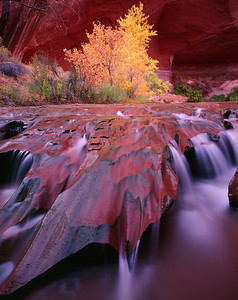 Coyote Gulch, Glen Canyon National Recreation Area