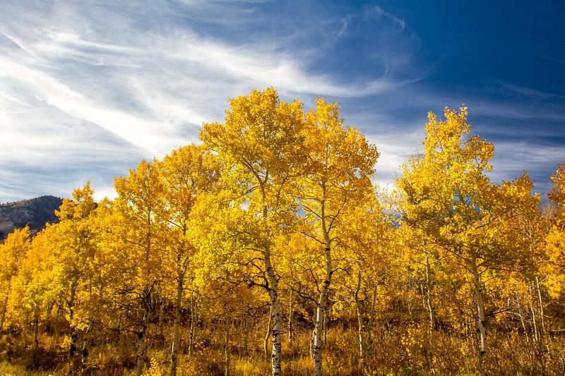 Fall Color, Mount Timpanogos