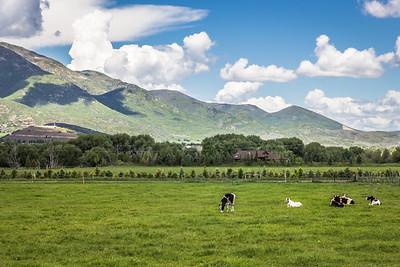 Heber Valley Dairy Farm