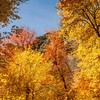 Fall Color, American Fork River