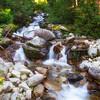 White Pine Fork