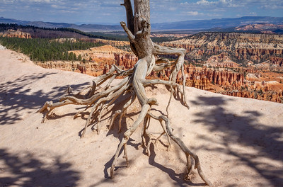 On the Edge at Bryce Canyon