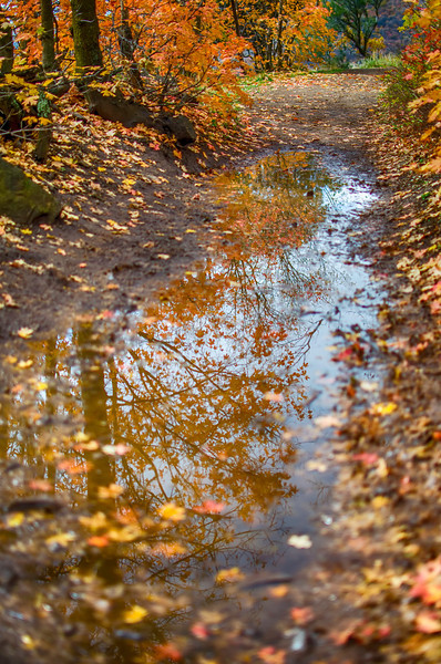 Mud Puddle Reflections
