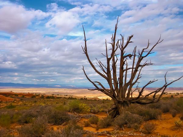 Tree in Moab, UT