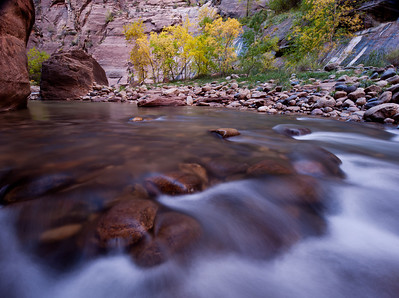 Zion National Park, Utah.  Virgin River Narrows, with autumn colored foliage in the canyon narrows.