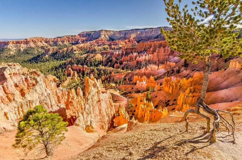 Bryce Canyon Overlook