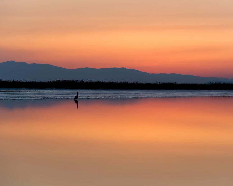 Lone Heron at Farmington Bay