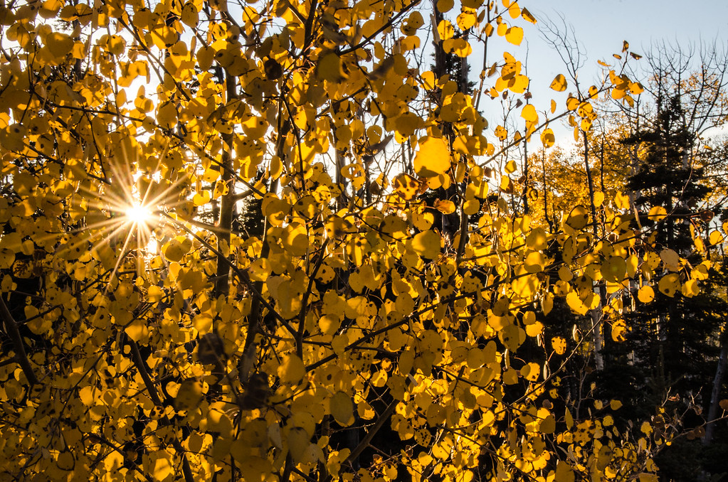 Fall above Cedar Ridge