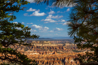 Bryce Canyon Framed by Conifers