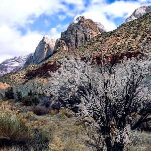 Spring in Zion Canyon, Utah