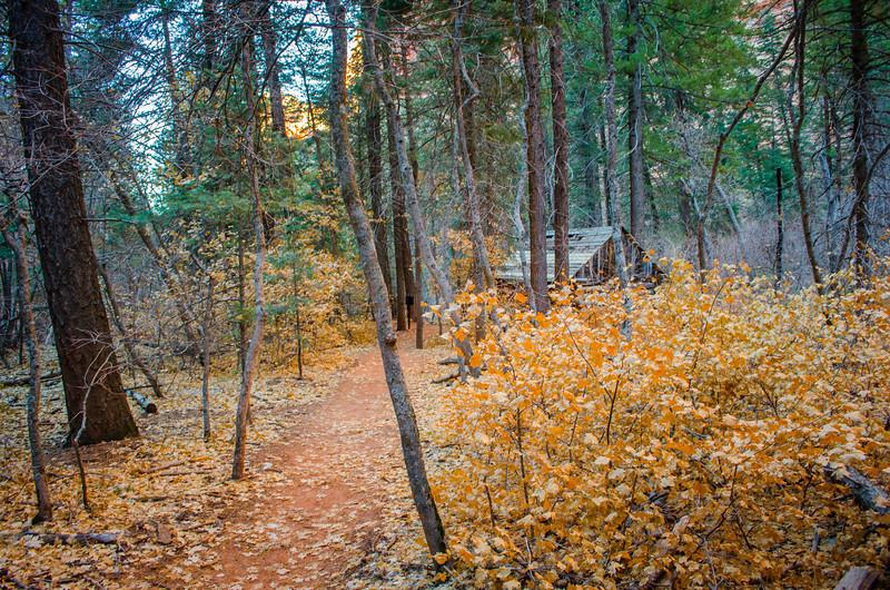Cabin at Taylor Creek