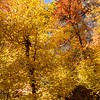 Fall Color American Fork River