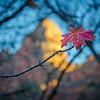 Fall Lingers