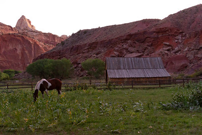 Horse and Barn at Capitol Reef