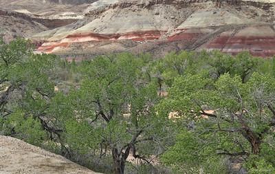 Morrison Formation and Trees