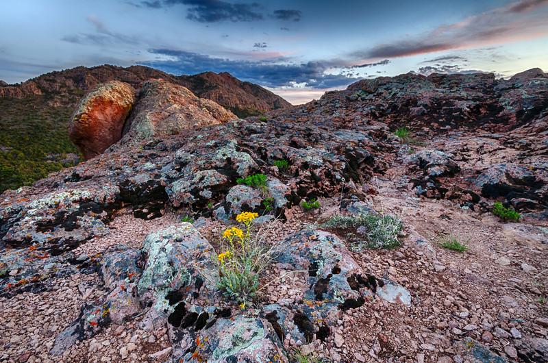 Desert Flower at Sunset