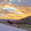 Bull Moose at Sunrise