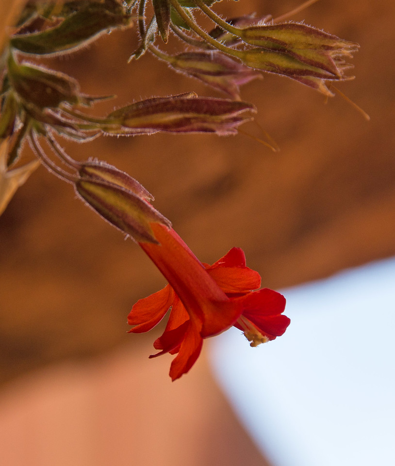 Not an editing  mistake- a few flowers clung to seeps in the roof of the alcove.