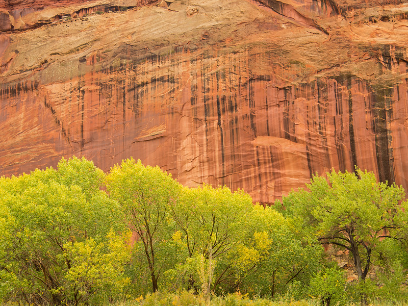 By the time we entered Capitol Reef, it was raining steadily, which helped bring out the colors in the surrounding walls.