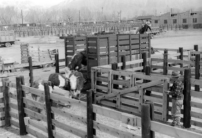 Ogden-Union-Stockyards_0001
