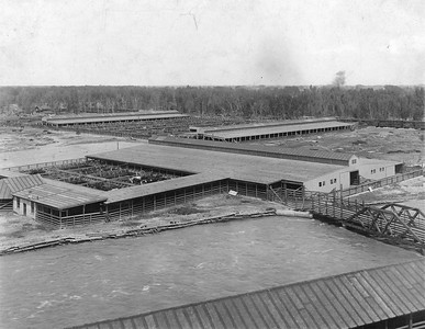 Ogden-Union-Stockyards_0256_1919