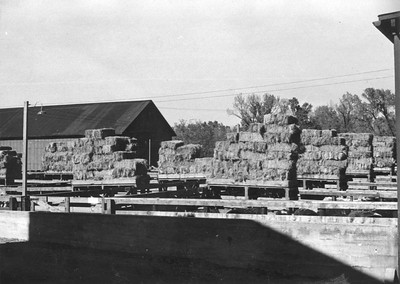Ogden-Union-Stockyards_0022_Oct-25-1947