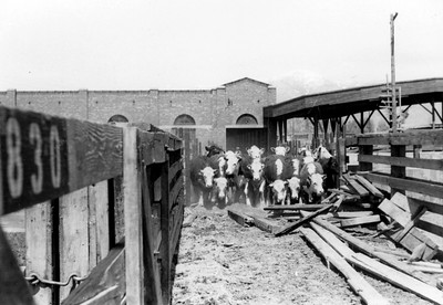 Ogden-Union-Stockyards_0003