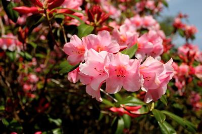 Virágok a kastélykertben