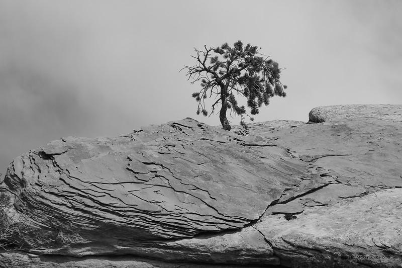 Tree, Ute Canyon