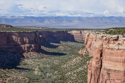 Lower Ute Canyon, Book Cliffs