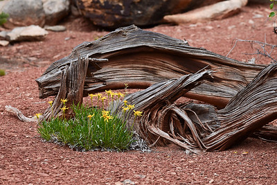 Flowers, Deadwood, Ute Canyon