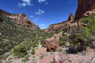 Looking up Ute Canyon