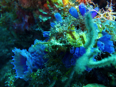 Sponges and Salps