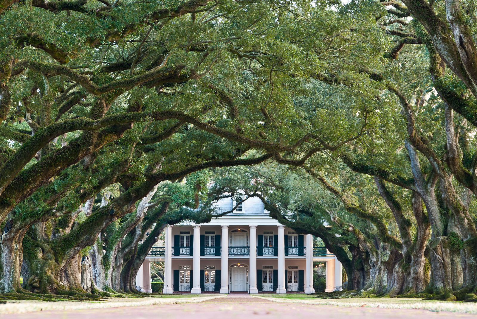 """<span id=""""title"""">Oak Alley</span> <em>Oak Alley Plantation</em> Here's the money shot. The alley of oaks extends all the way from the house to the road, about 1000 ft (300 m) away. No one knows who planted the oaks - they predate the house."""
