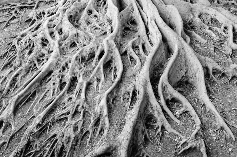 "<span id=""title"">Roots</span> <em>Balboa Park</em>"