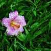 Flower in Grass