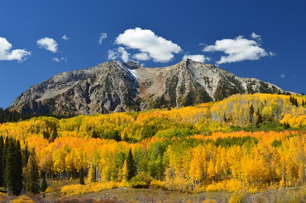 Multi-colored aspen flank East Beckwith Mountain at Kebler Pass, Colorado