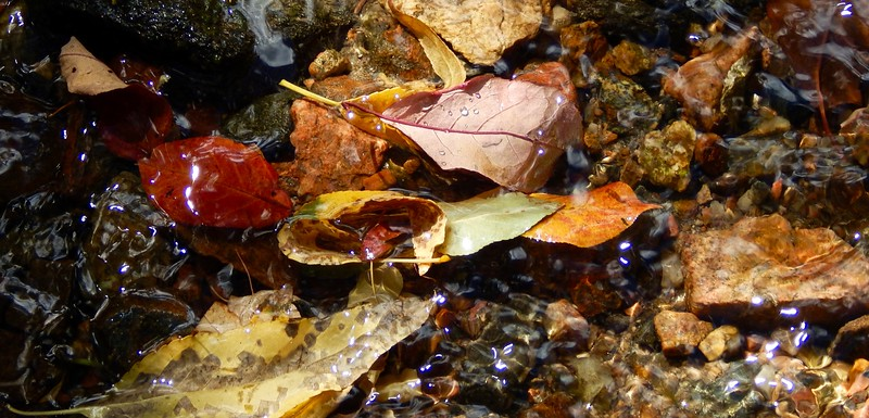 Fallen leaves in Bear Creak at Lair o' the Bear Park, Colorado