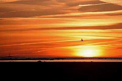 Trana i solnedgången