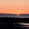 Svanar i soluppgången