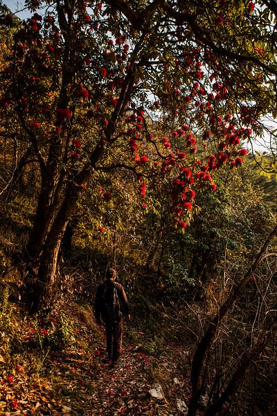 Photograph by Chetan