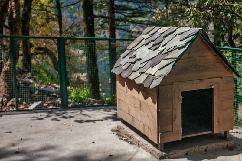 Kennel at Rockvilla in Jabarkhet near Landour, Uttarakhand