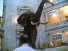 Natural history museum Washington D.C.