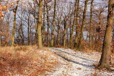 Les nad Pisárkami, Brno, 3.ledna 2010.