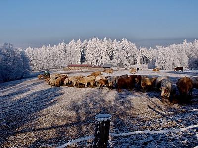 Zima / Winter