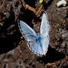 Blue butterfly! A blue spritely perhaps?!